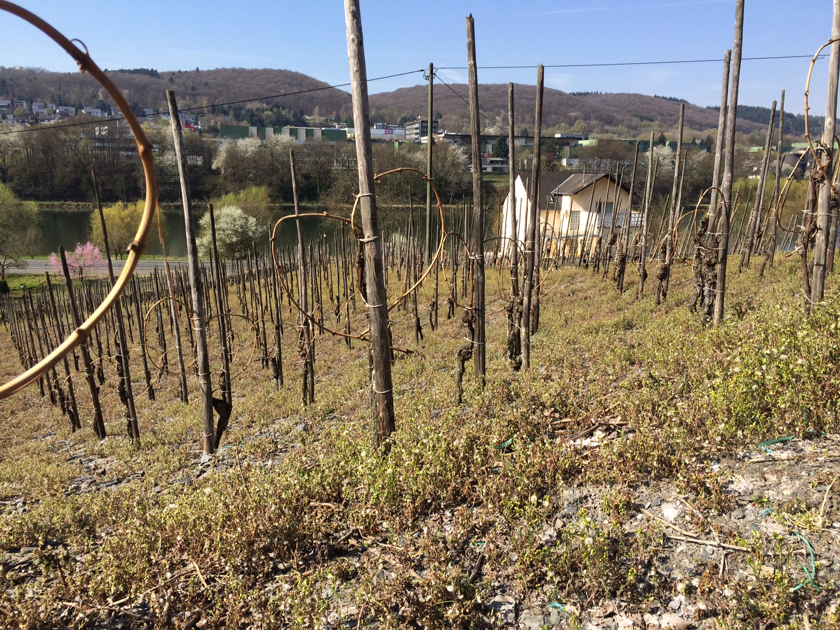 Mosel Vines Website size