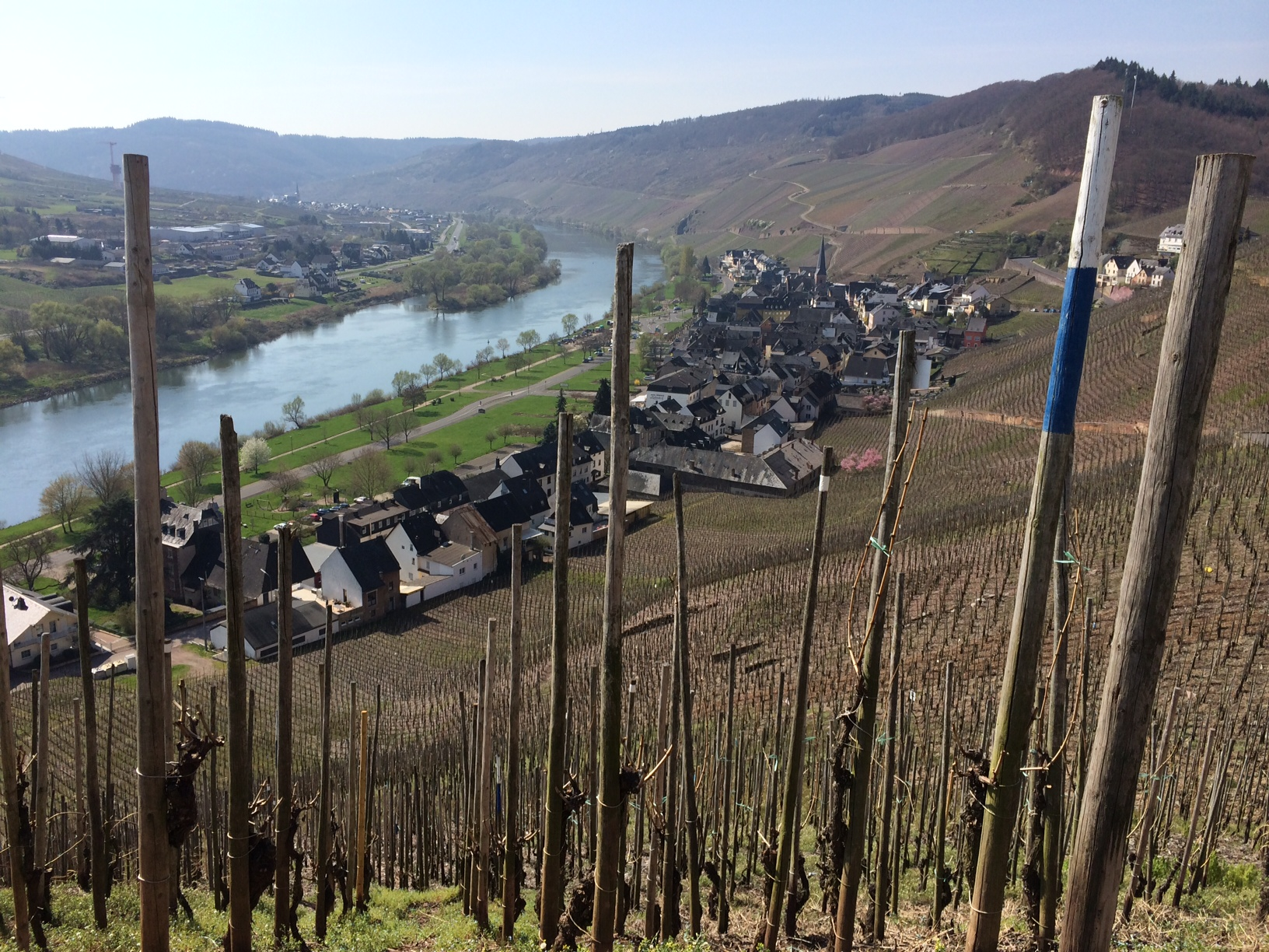 Website size Mosel Pic